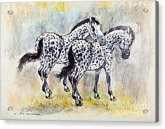 Appaloosa Horses Acrylic Print by Kurt Tessmann