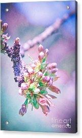 Apple Blossom Acrylic Print by VIAINA Visual Artist