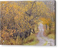 Apple Orchard Road Acrylic Print by Alan L Graham