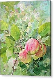Apple Pie Acrylic Print by Kris Parins