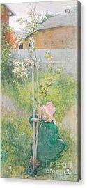 Appleblossom Acrylic Print by Carl Larsson