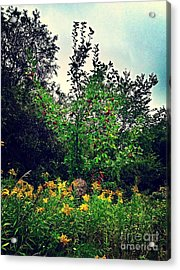 Apples And Hornets 2 Acrylic Print by Garren Zanker