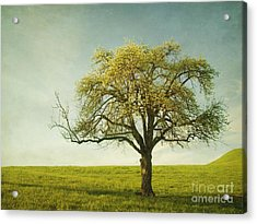 Appletree Acrylic Print by Priska Wettstein