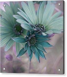 Aqua Gerberas Acrylic Print by Bonnie Bruno