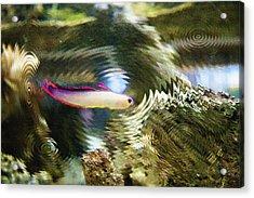 Aquarium Art 25 Acrylic Print by Steve Ohlsen