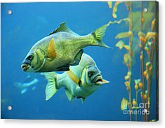 Aquarium Acrylic Print by Tap  On Photo