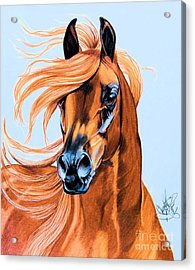 Arabian Portrait In Color Pencil Acrylic Print by Cheryl Poland