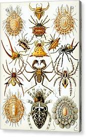 Arachnida Acrylic Print by Georgia Fowler