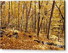 Arboretum Trail Acrylic Print by Steven Ralser