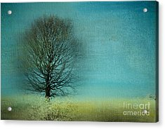 Arbrensens - V06e Acrylic Print by Variance Collections