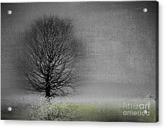 Arbrensens - V06gr Acrylic Print by Variance Collections