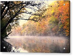 Arching Tree On The Current River Acrylic Print by Marty Koch
