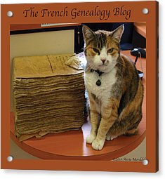 Archives Cat With Fgb Border Acrylic Print by A Morddel