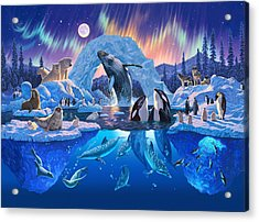 Arctic Harmony Acrylic Print by Chris Heitt