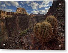 Arizona Morning Acrylic Print by Kiril Kirkov