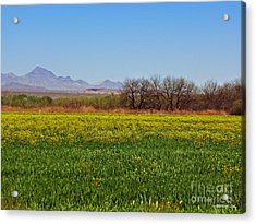 Arizona Spring Acrylic Print by Methune Hively