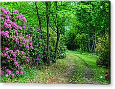Around The Bend Acrylic Print by Kenny Francis