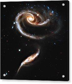 Arp 273 Rose Galaxies Acrylic Print by Ricky Barnard