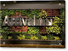 Arrival Sign Arrow And Flowers At Singapore Changi Airport Acrylic Print by Imran Ahmed