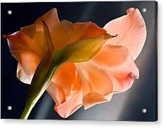 Art Of Gladiolus. Acrylic Print by Terence Davis