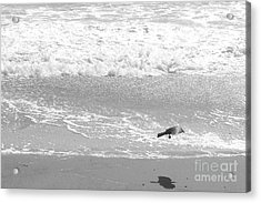 As  The Crow Flies Acrylic Print by Artist and Photographer Laura Wrede