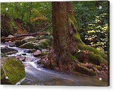 As The River Runs Acrylic Print by Karol Livote