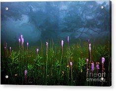 Ascension II - Blue Ridge Parkway Acrylic Print by Dan Carmichael