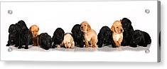 Ash Trail Pups Acrylic Print by Pam Gabriel