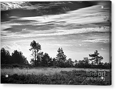 Ashdown Forest In Black And White Acrylic Print by Natalie Kinnear