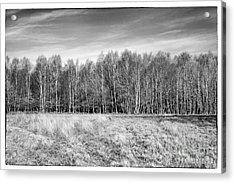 Ashdown Forest Trees In A Row Acrylic Print by Natalie Kinnear