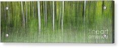 Aspen Grove  Acrylic Print by Priska Wettstein