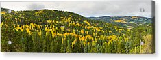 Aspen Hillside In Autumn, Sangre De Acrylic Print by Panoramic Images