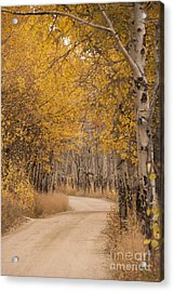 Aspen Trees In Autumn Acrylic Print by Juli Scalzi