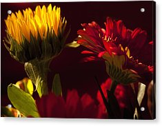 Aster Acrylic Print featuring the photograph Asters In The Light by Andrew Soundarajan
