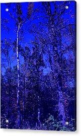 Attitude Blue Acrylic Print by Nina Fosdick