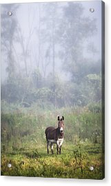 August Morning - Donkey In The Field. Acrylic Print by Gary Heller