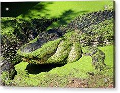 Australia, Broome Acrylic Print by Cindy Miller Hopkins
