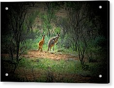 Australia, New South Wales, Broken Acrylic Print by Rona Schwarz