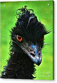 Australian Emu Acrylic Print by Blair Stuart