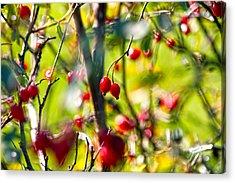 Autumn Berries  Acrylic Print by Stelios Kleanthous