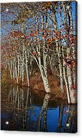 Autumn Blue Acrylic Print by Karol Livote