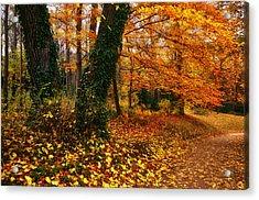 Autumn Colors Acrylic Print by Oleksandr Maistrenko