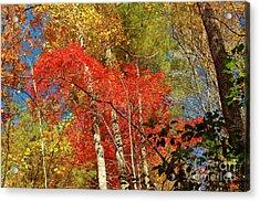 Autumn Colors Acrylic Print by Patrick Shupert
