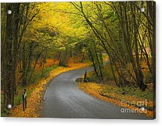 Autumn Colours Acrylic Print by Stephen Dowdell