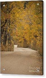 Autumn Drive Acrylic Print by Juli Scalzi