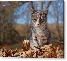 Autumn Farm Cat #2 - Horizontal Acrylic Print by Nikolyn McDonald