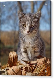 Autumn Farm Cat - 2 Acrylic Print by Nikolyn McDonald