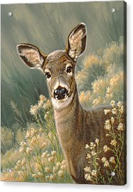 Autumn Fawn-blacktail Acrylic Print by Paul Krapf