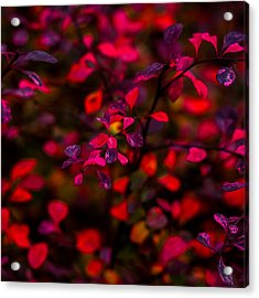 Autumn Flames 2 - Square Acrylic Print by Alexander Senin