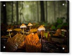 Autumn Fungus Acrylic Print by Ian Hufton